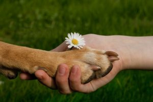 Zeit zum Wechseln bzw. Tierschutz mit Steuerberater Bautzen Steuerberatung Bautzen soziales Engagement